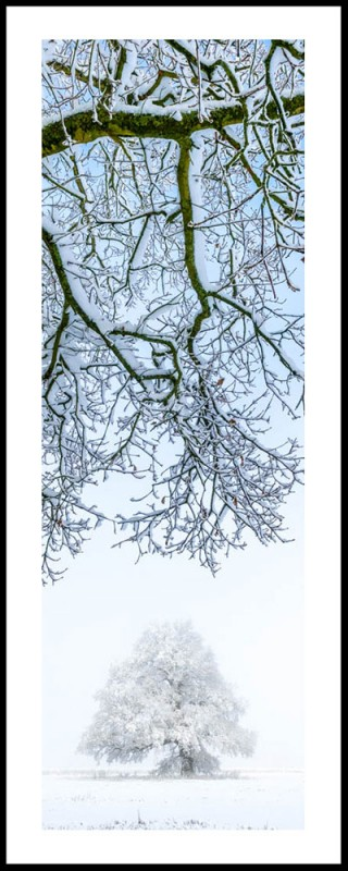 Oak Tree In Snow 2191 On Paper Andy Small