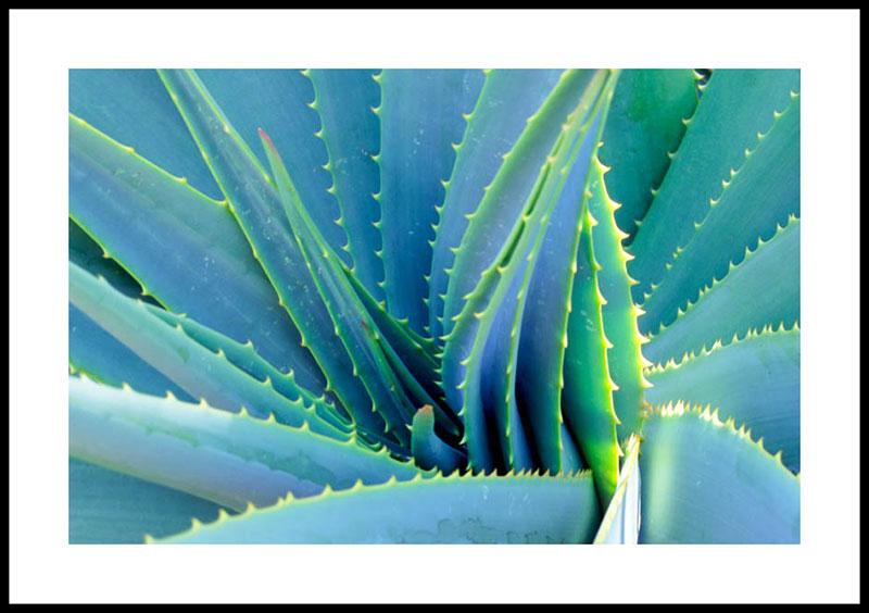 Aloe Vera 1157 paper