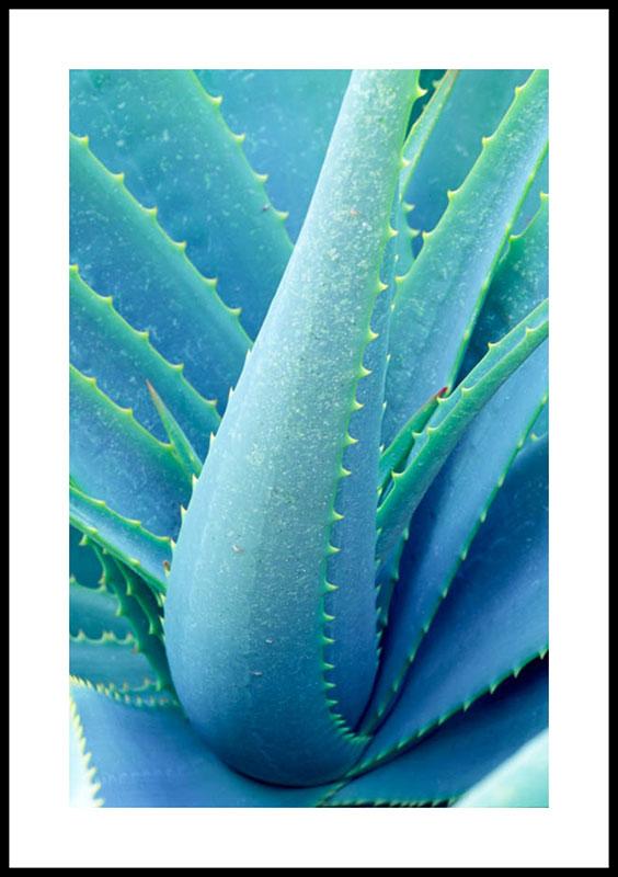 Aloe Vera 1158 paper