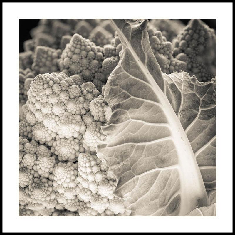 Black and White Romanesco Broccoli