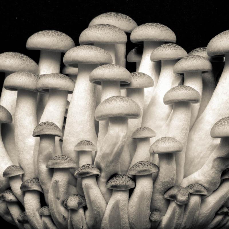 Black and White Mushrooms 2437
