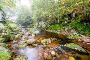 River Breamish 3164