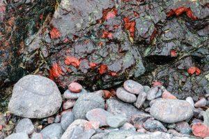 Kynance Cove Rocks 3178