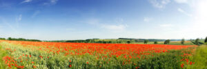 Poppy Field Cotswolds Panoramic