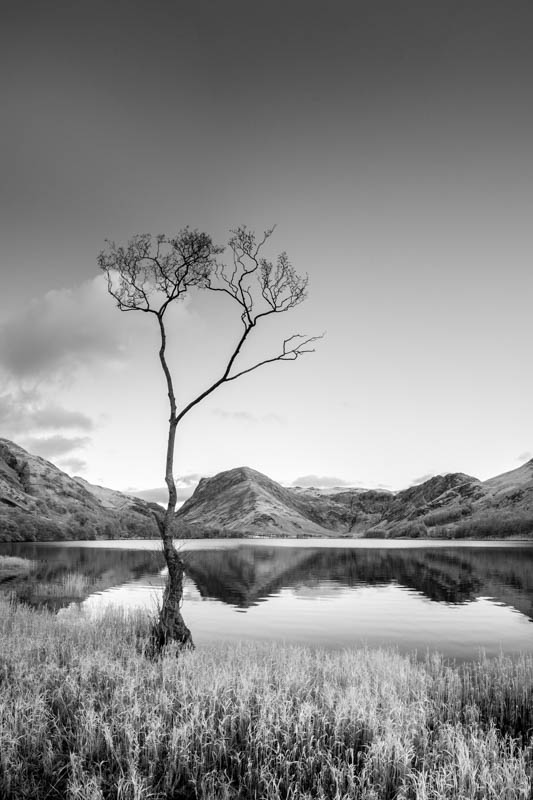 Buttermere, the lone tree 4064