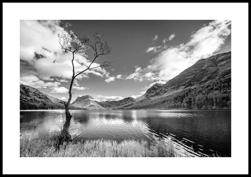 Buttermere, the lone tree 4067