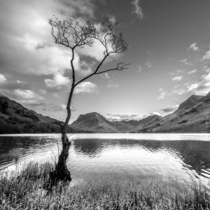 Buttermere the lone tree 4073