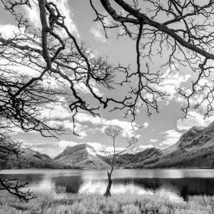 Buttermere the lone tree 4074
