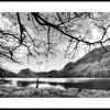 Buttermere, the lone tree 4081