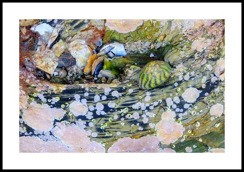 Cornwall Rock Pool 4152