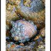 Cornwall Rock Pool 4153