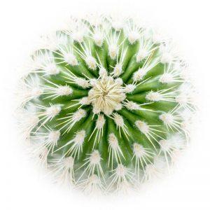 Cactus 4350