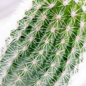 Cactus 4351