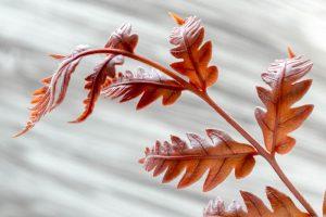 Ferns 4362