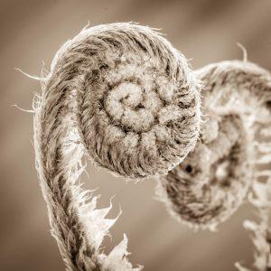 Ferns unfolding 4376SQ