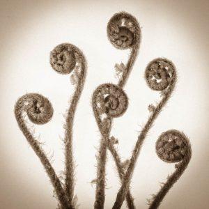 Ferns unfolding 4388SQ