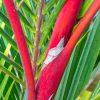 Bamboo 4389