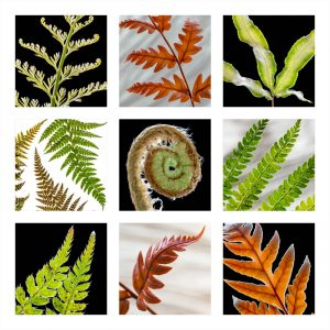 Ferns and Leaves