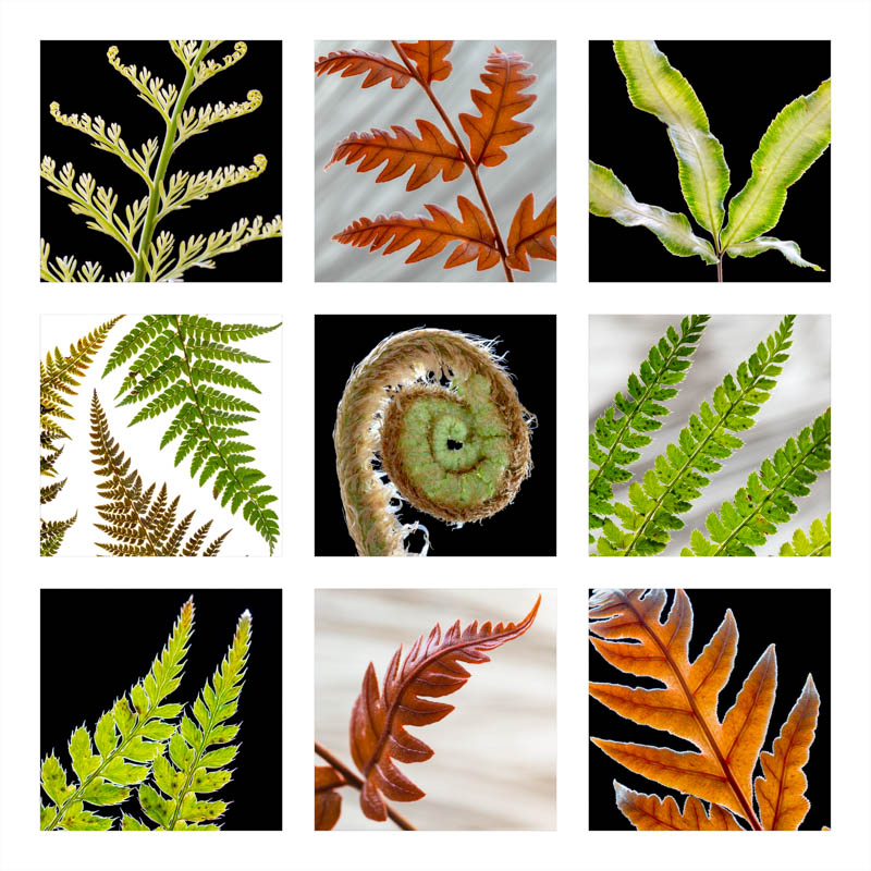 Square Greetings Card Ferns 4397