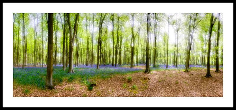 Itchen Wood Bluebell Panoramic