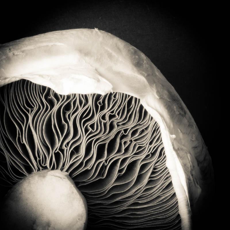Black and White Mushroom