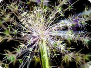 Allium 4871 Worktop saver