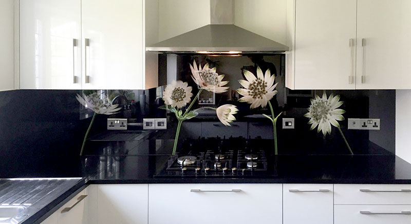 Astrantia Flower photography Glass Kitchen Splashback