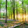 Bluebell Wood 4208 Worktop saver
