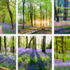 Bluebell Coasters set of six