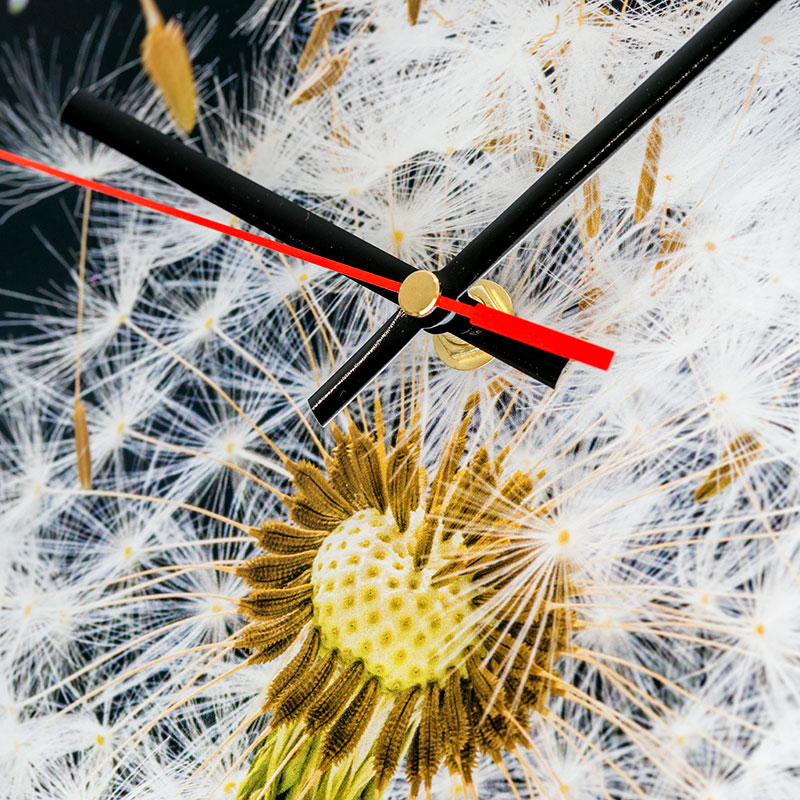 Dandelion Clock Close up
