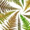 Ferns Worktop saver