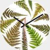 Ferns Glass Wall Clock