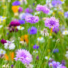 Cornflowers Worktop saver