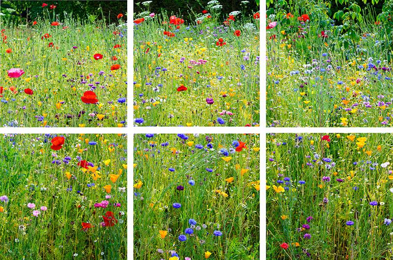 Wisley Wild Flower Meadow Coasters set of six