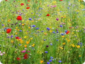 Wisley Wild Flower Meadow Worktop saver